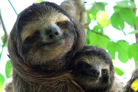 Sloth & baby